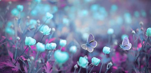 I hvilken have plukker du dine visioner og drømme? Kom, lad os kravle gennem hullet i hækken, stikke af og gå på opdagelse efter forunderlige og fortryllende haver….du gider godt…